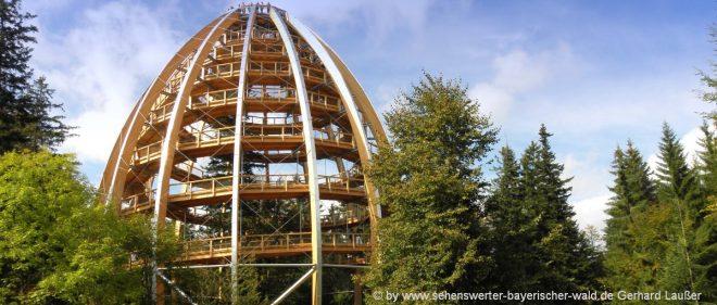 baumwipfelpfad-eventlocation-nationalpark-bayerischer-wald-aussichtspunkt