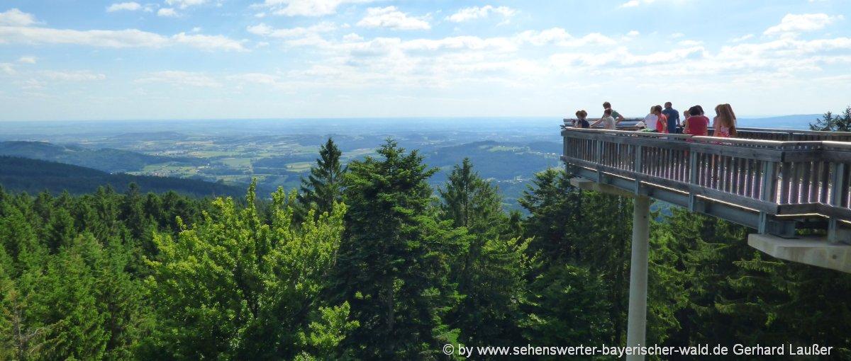 sankt-englmar-freizeitangebote-niederbayern-ausflug-highlights-waldwipfelweg